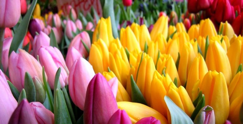 Цветы и саженцы