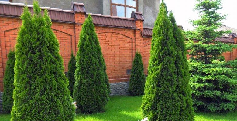 Садовая территория дома в Анапе